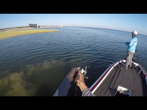 Metro City Bass Club Championship 2019- Falcon Lake