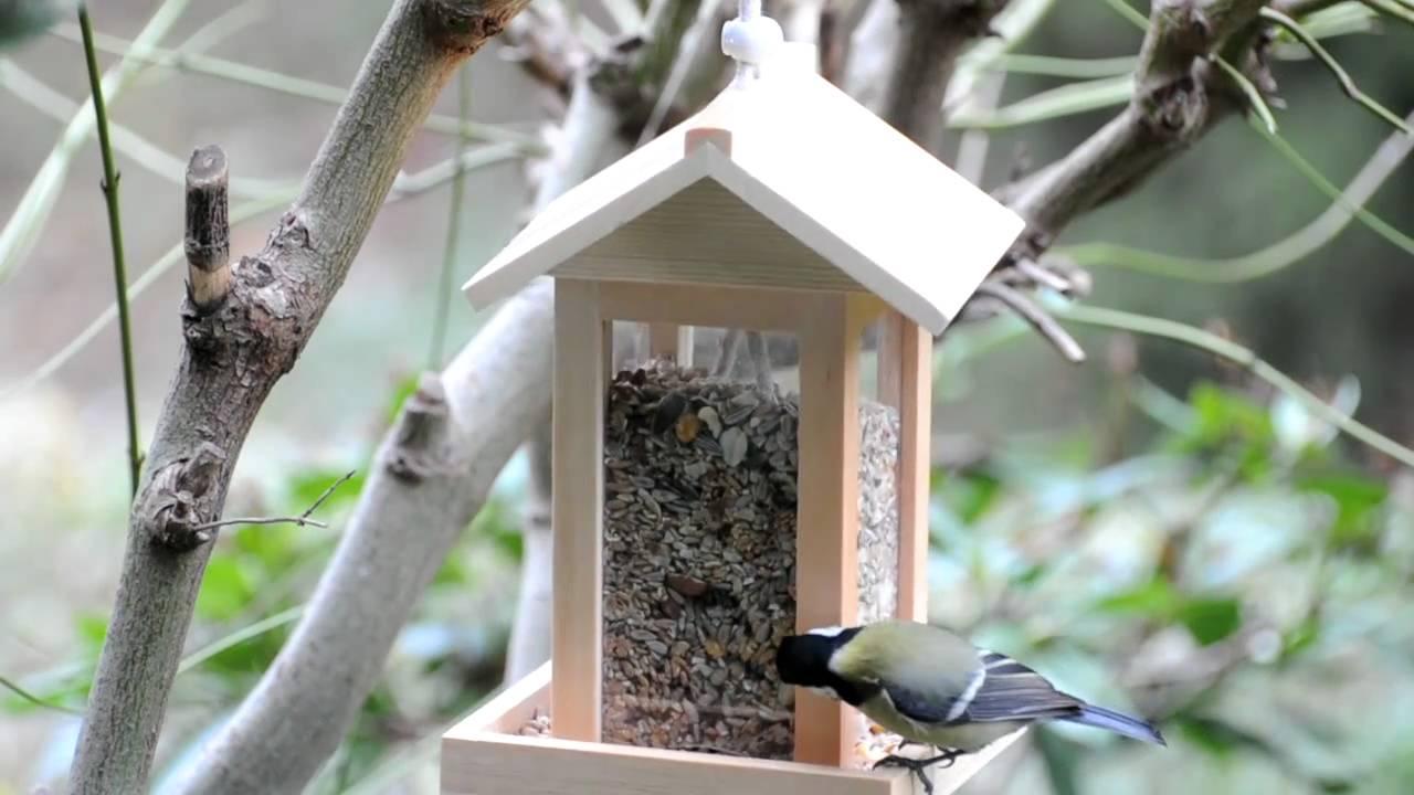 kohlmeise und kleiber am vogelfutterh uschen winterf tterung youtube. Black Bedroom Furniture Sets. Home Design Ideas