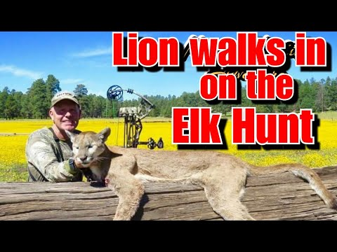 Lion Hunting On The San Carlos With Native Hunting Adventure