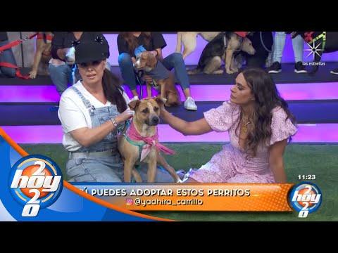 Pasarela de perritos en adopción | Hoy