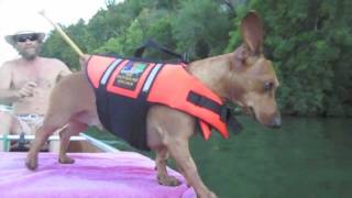 Dachshund In A Lifejacket: A Chiweenie, A Canoe, And The Colorado River (lady Bird Lake)