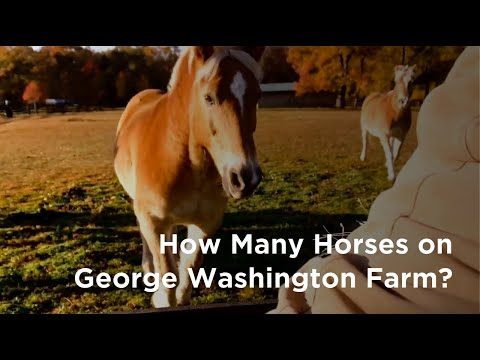 How Many Horses Did George Washington Have?