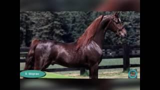 Фото лошадей самый красивых🐴