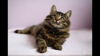 Орфей ищет дом. Котенок в дар.