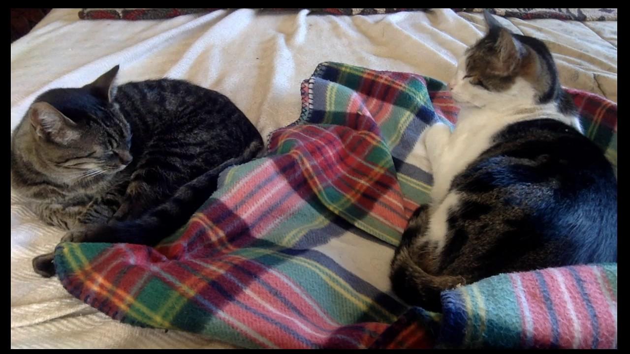 Sleeping Cat Live Stream