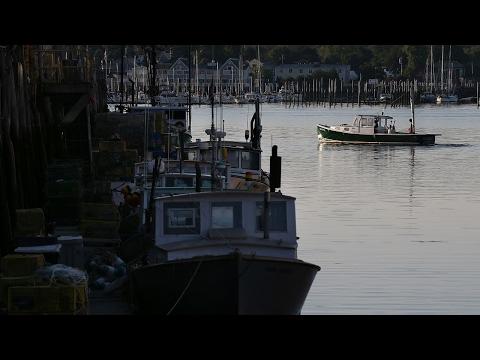 Sea Scallop History Offers Sustainability Lesson