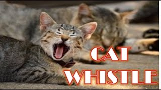 Amazing Cat Whistle - whistle sound effect cat call
