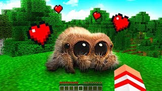 ENCONTREI A ARANHA MAIS FOFA DO MINECRAFT !