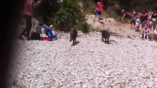 Sanglier sur la plage de cassis  normal