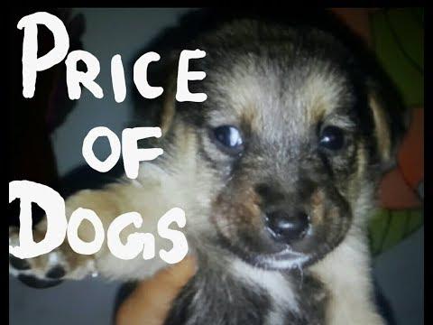 price of basic dog breeds in india