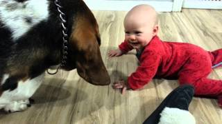Baby Twins Play With Basset Hound