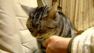 麺好き猫.