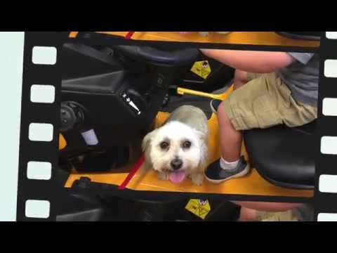 """5 Year Old Havanese """"Molly"""" Before/After Video   Georgia's Top Dog Trainers"""