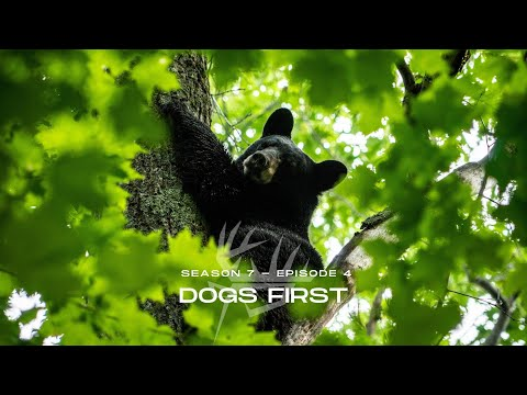 Wisconsin Bear Hunt With Dogs