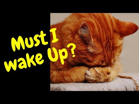 Pets Being Lazy and Funny Compilation~Cats & Dogs Video~Animals Being Animals Series