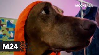 Одежда для собак. \Городской стандарт\ - Москва 24