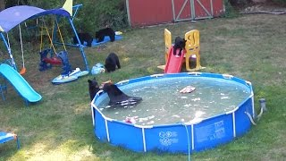 Family of Black Bears Take Over Back Yard in New Jersey!! This is ours now!