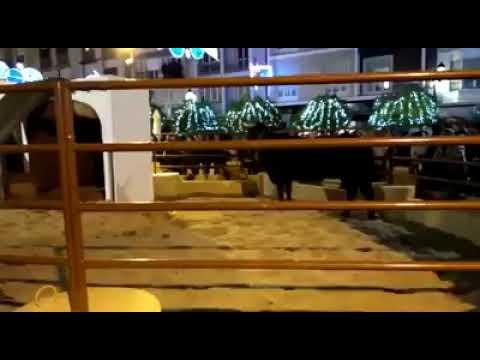 Vídeo de Pacma con la vaca en el Belén de Lucena