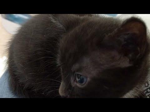 Kitten Close Up 2017-08-05