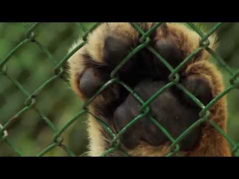 My home is not your home-Animals victim of trafficking - TvAgro por Juan Gonzalo Angel