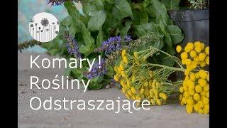 Jak Pozbyc Sie Komarow Z Ogrodu I Tarasu Rosliny Odstraszajace Komary Youtube