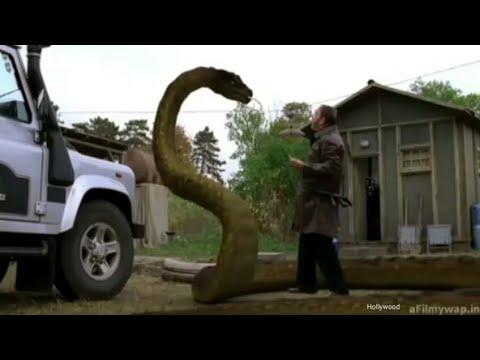 Anaconda Attack    Best Hollywood Movie    In Hindi Dubbed Audio.