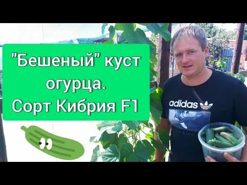 Сорт Кибрия F1