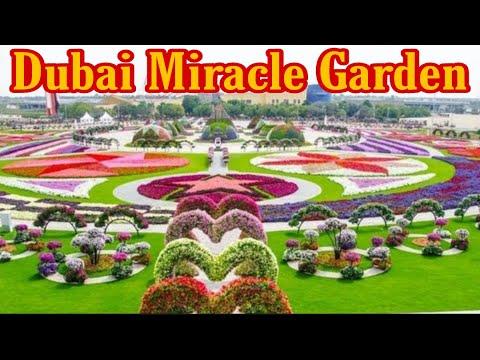 Dubai Miracle Garden 2021 Full HD. দুবাই মিরাক্কেল গার্ডেন। दुबई मिराकेल गॉर्डन।