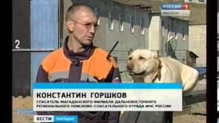 Собака-спасатель Егоза получила золотую медаль