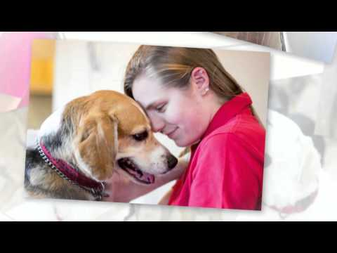Dog day care in Springfield, VA (dog boarding, dog grooming and dog training)