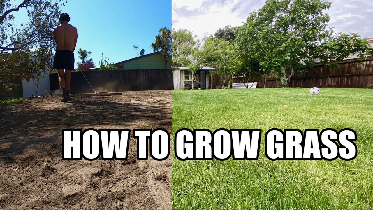 Download HOW TO GROW GRASS