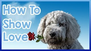 How to Tell Your Dog You Love Them!