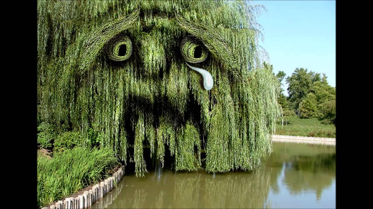 UNDER THE WEEPI... Picture Of A Weeping Willow Tree