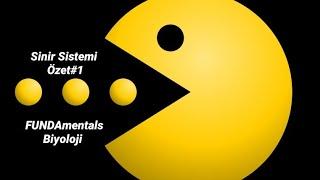 Sinir Sistemi Özet #1