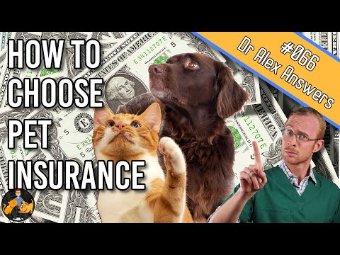 6 Steps To Choosing The Best Pet Insurance For Your Dog + Cat - Dog + Cat Health Vet Advice