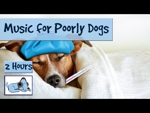 Music for Sick Dogs. If your Dog is ill - Try this Music to Relax them! 🐶 #POORLY01