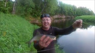 Рыбалка на р.Оредеж. Ловим на фидер голавлей.