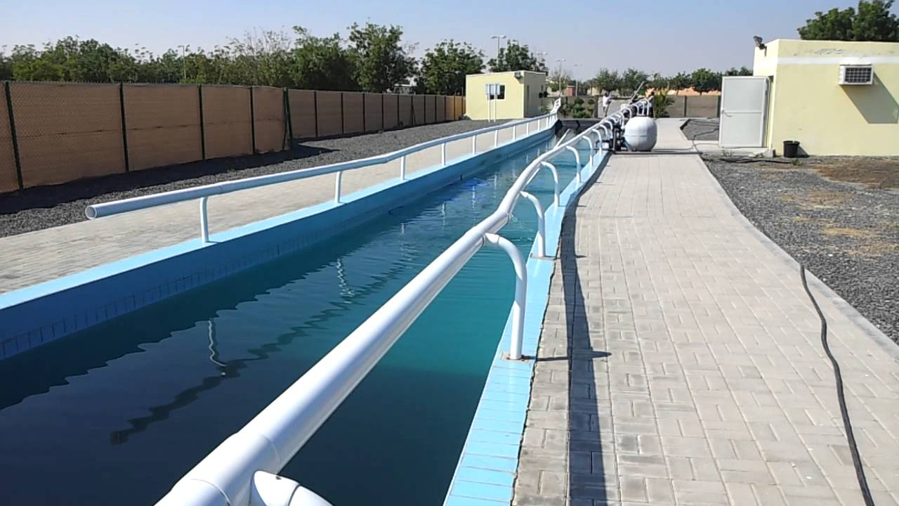 Horse Swimming Pool At Sharjah Equestrian Club Youtube