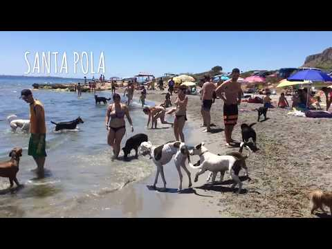 The Plague Dogs-film complet en francais from YouTube · Duration:  1 hour 6 minutes 5 seconds