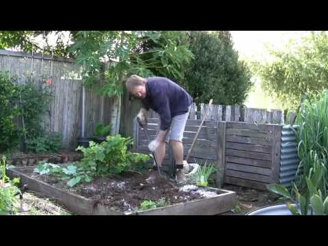 Vegetable Gardening: Growing Onions – How to Grow Onions