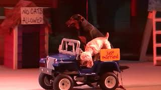 Pets Ahoy (Full Show/Full HD) - Jan 16 2015 2:15pm - SeaWorld Orlando