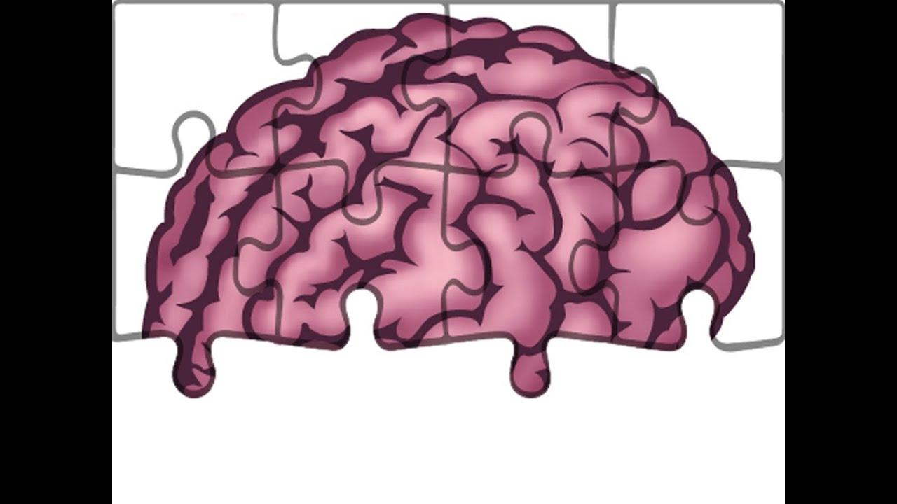 Anatomie - Hirnnerven: Nervus Vestibulocochlearis - YouTube