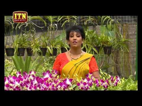Orchid Plantation,Workshop to
