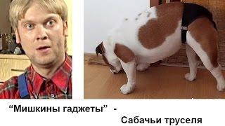 """""""Мишкины труселя"""" - очередная течка у собаки, меряем трусы."""
