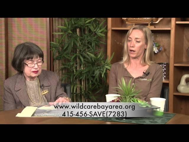 Public Advocate: Wildcare