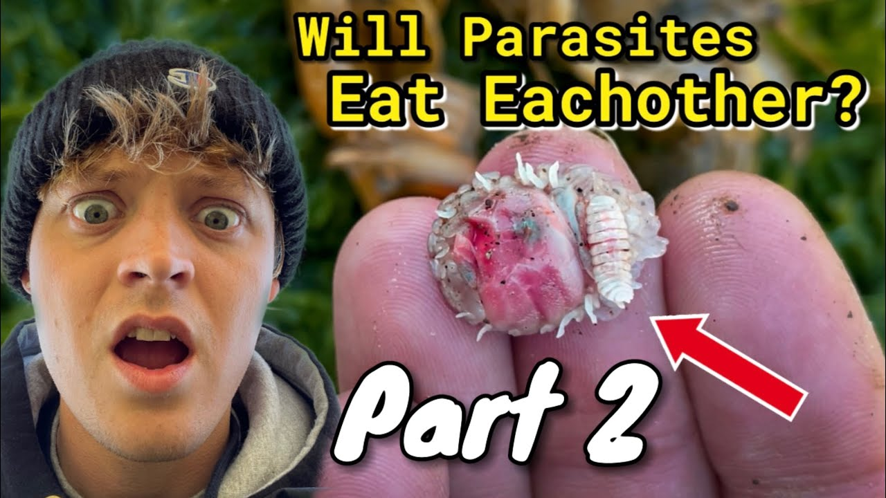 Will Shrimp Parasites Eat Each Other? PART 2 #shorts