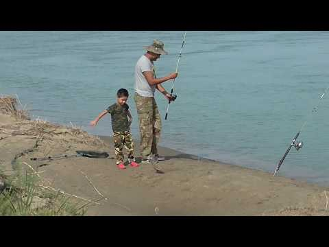 Супер рыбалка на реке ИЛИ. Отрыв по сазану! Сын меня обловил. 9-11 сентября