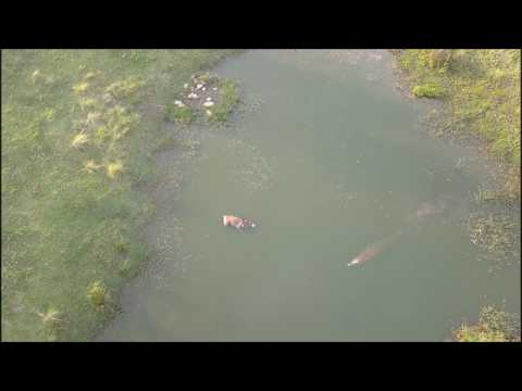 Game reserve South Africa mavic pro Plettenberg Safari Africa do Sul