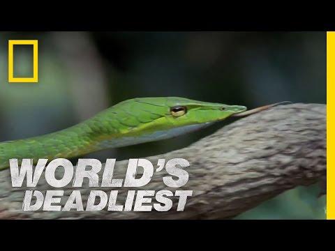 Snake's Secret Weapon | World's Deadliest