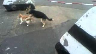 видео лесбиянок. кошка и собака